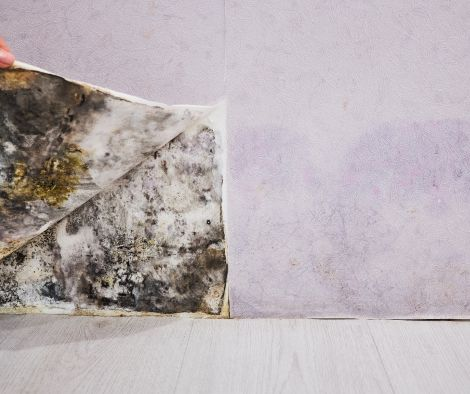 Is Mold Hiding In The Home You Are Buying?