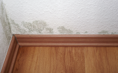 Mold Removal in Montana