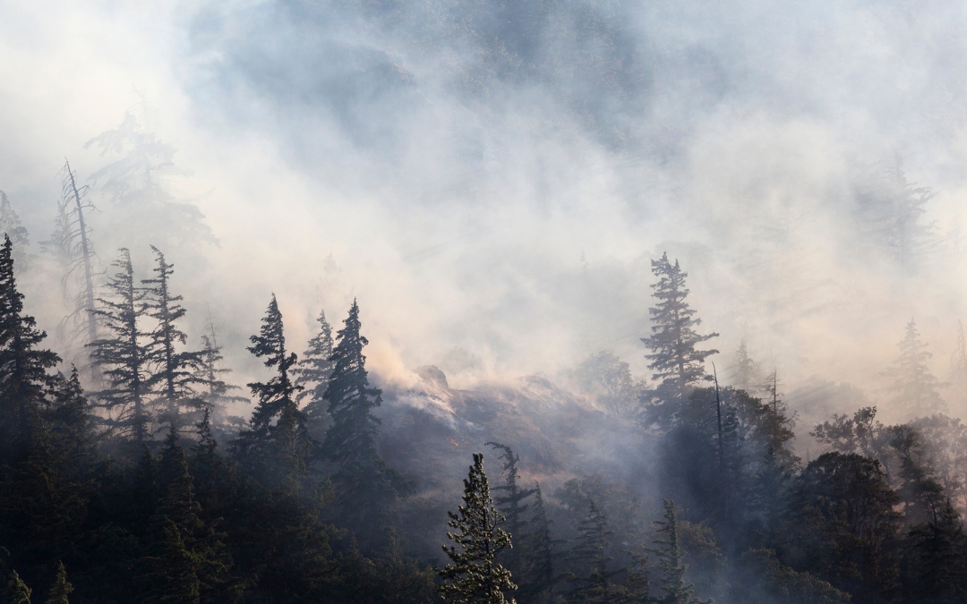 Help! How Can I Clear My House of Wildfire Smoke and Ash?